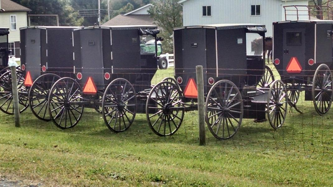 Amish buggies parked in row