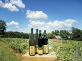 Troutman Vineyards and Winery